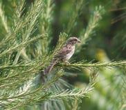 Bird. This little bird is enjoying the sun Stock Images