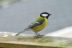 Bird. A little bird outside in the winter Royalty Free Stock Photos