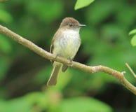 Bird. This little bird is sitting so pretty Royalty Free Stock Photos