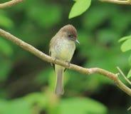 Bird. This little bird is sitting so pretty Stock Photo