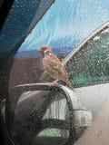 Bird live royalty free stock photos