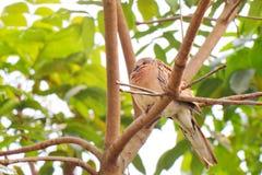 Bird royalty free stock photos