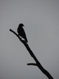 Bird. Lonely bird sitting on tree Stock Photos