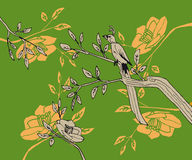 Bird with long tail sits a branch with leaves and flowers on an. Bird with long tail sits a branch with leaves and flowers Stock Images