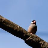 Bird looking Royalty Free Stock Photos