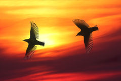 Bird Lovers. Two birds flying over sky in sunset, warm and beautiful cloudscape in background royalty free stock image