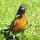 Bird munchies Stock Photography