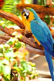 Bird, Macaw Stock Image