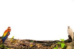 bird macaw holding timber wood on background Stock Image