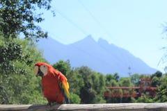 Bird, Macaw, Parrot, Sky Stock Image