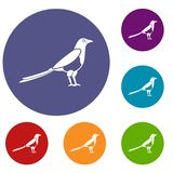 Bird magpie icons set. In flat circle reb, blue and green color for web Stock Images