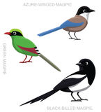 Bird Magpie Set Cartoon Vector Illustration Stock Images