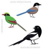 Bird Magpie Set Cartoon Vector Illustration Stock Images
