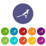 Bird magpie set icons. In different colors isolated on white background Stock Image