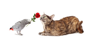 Bird Making Friends With Cat Stock Image