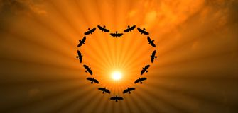 Bird Making Heart On Sky Together Stock Photos
