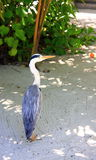Bird in maldives Royalty Free Stock Photo