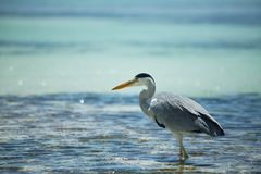 Bird on Maldives Stock Photography