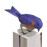 Bird Male Western Bluebird. 3D rendering with clipping path and shadow over white Stock Images
