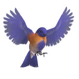 Bird Male Western Bluebird. 3D rendering with. Clipping path and shadow over white Royalty Free Stock Photography