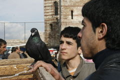 Bird Market. Children look at a pigeon at the bird market established every week in the historic walls of Edirnekapi district in Istanbul, Turkey, on March 2 Royalty Free Stock Image