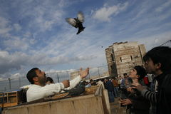 Bird Market. A seller shows a pigeon at the bird market established every week in the historic walls of Edirnekapi district in Istanbul, Turkey, on March 2,2008 Stock Photos