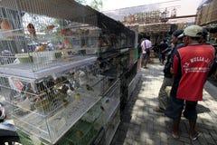 Bird market Royalty Free Stock Image
