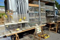 Bird market Stock Images