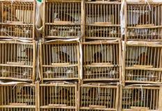 Bird Market Stock Image