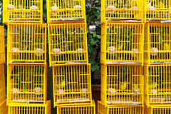Bird Market in Hong Kong Stock Photography