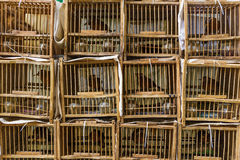 Bird Market in Hong Kong Stock Image