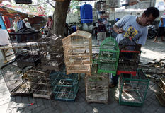Bird market Stock Image