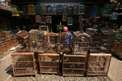 Bird Market in Yogyakarta, Central Java, Indonesia. Royalty Free Stock Photo