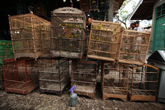 Bird Market in Yogyakarta, Central Java, Indonesia. Royalty Free Stock Photos