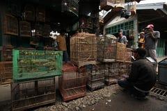 Bird Market in Yogyakarta, Central Java, Indonesia. YOGYAKARTA, INDONESIA - JULY 31, 2011: Vendor sells song birds and parrots at the Pasar Ngasem Market in Stock Photos