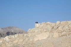 Bird in the Masada fortress Royalty Free Stock Photography