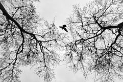 Bird in the middle of trees Royalty Free Stock Photos
