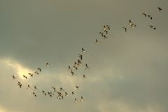 Bird migration Stock Photos