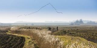 Bird migration. In the Netherlands, Zeeland Stock Photography