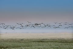 Bird migration Royalty Free Stock Photo