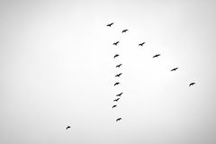 Bird migration. Search for new home Royalty Free Stock Photo