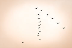 Bird migration. Search for new home in sunset Royalty Free Stock Images
