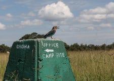 Bird on the milestone Stock Image