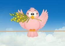 Bird on mimosa flowers Stock Photos