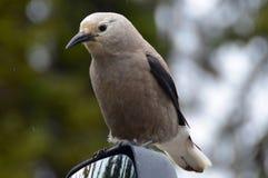 Bird on a mirror Stock Photo