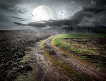 Bird and moon. Country road under moon and flying bird Royalty Free Stock Photo