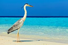 Bird is on the morning beach Stock Image