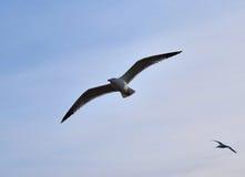 Bird& x27; mosca de s fotos de archivo