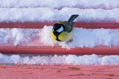 The bird most common in the winter sitting on a bench Royalty Free Stock Photos