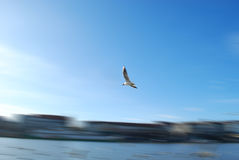 Bird in motion. Bird flying over the river with motion blur effect Royalty Free Stock Images